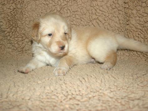 Gilda 4 Wochen alt