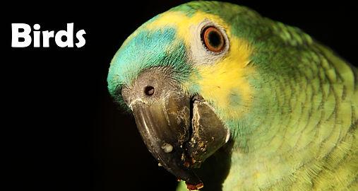 BirdsBanner.JPG