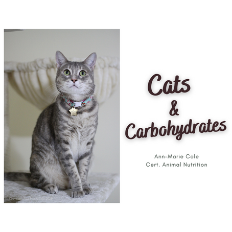 Cats & Carbohydrates