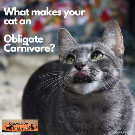 What makes your cat an obligate carnivore?