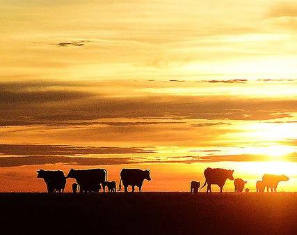 Ideas for Live Painting at Cattlemen's ball of Nebraska 2016