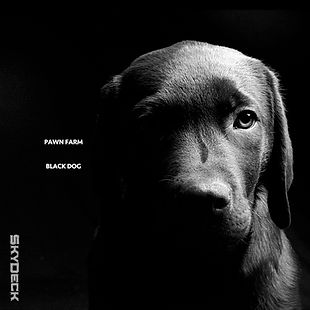 Black Dog 1250.jpg