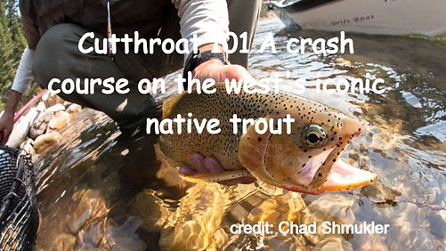 Cutthroat 101 A crash course on the west's iconic native trout