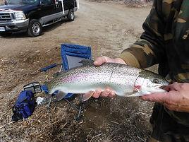 Donaldson trout