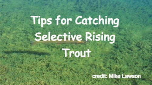 Tips for Catching Selective Rising Trout