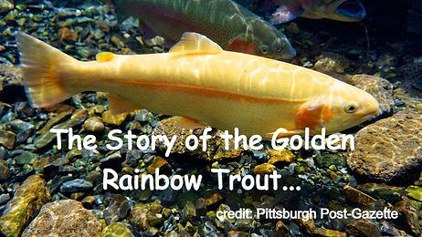 Origins of the Golden Rainbow Trout