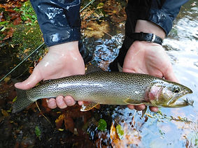 Lake Crescent Cutthroat Trout