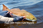 redfish on a fly