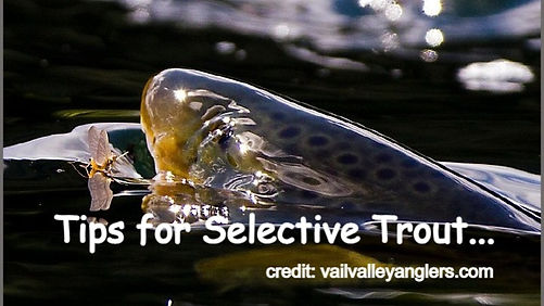 Tips for Selective Trout...