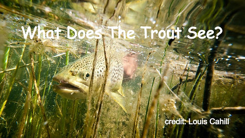 What Does The Trout See?