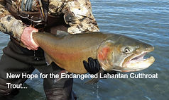 Endangered Lahontan Cutthroat
