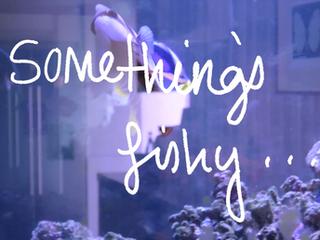 Something's fishy...