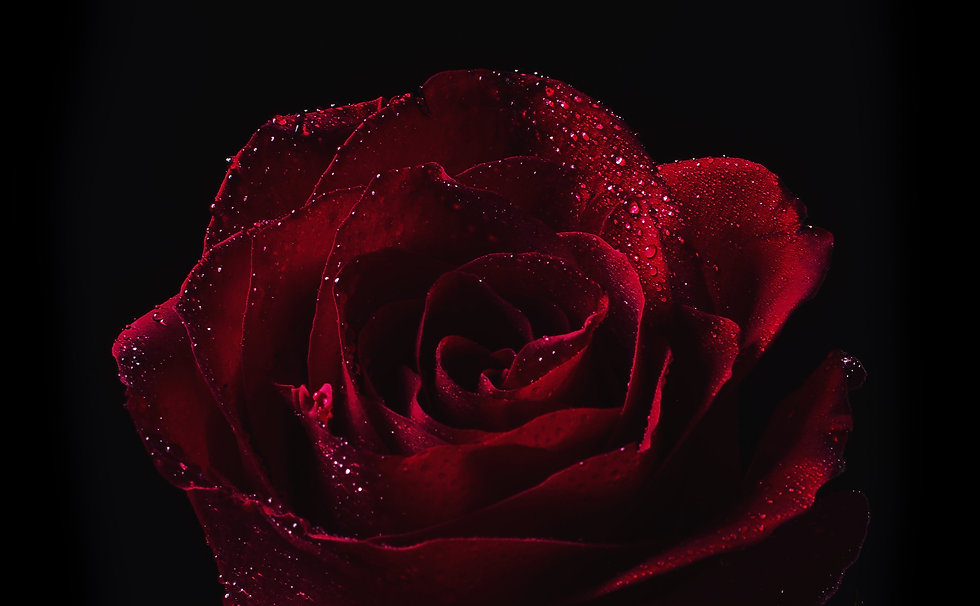 red-rose-with-dew-drops.jpg