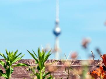 Mit Förderprogramm werden Berlins Dächer zu Oasen