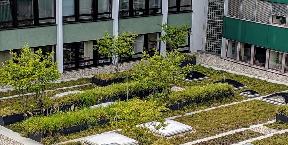 Grüne Dächer