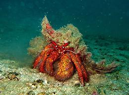 Unterwasserwelt Koh Tao