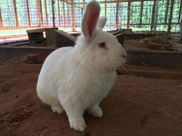 Roger in Rabbitat 2