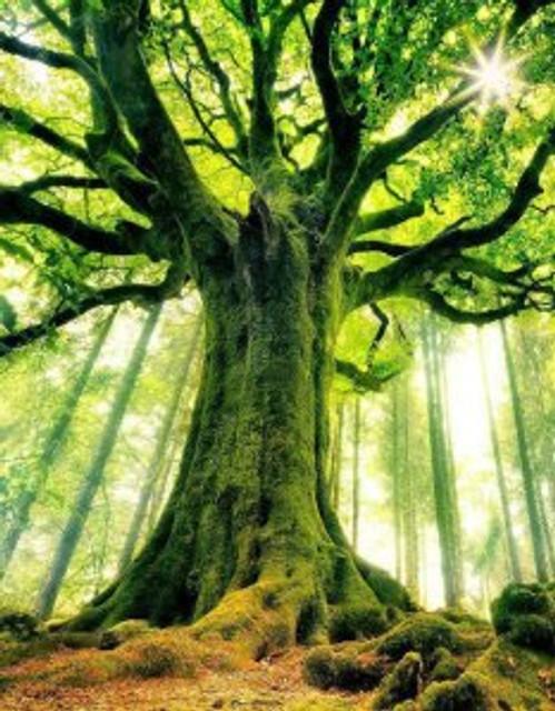 motherearthtree_crop