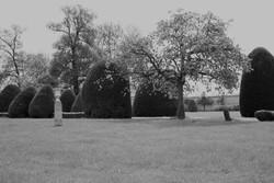 Le parc et ses ifs