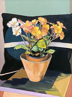 Orange Primulas in Terracotta Pot.jpeg