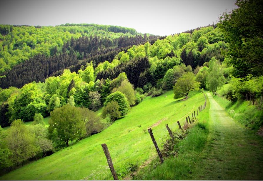 Groen pad