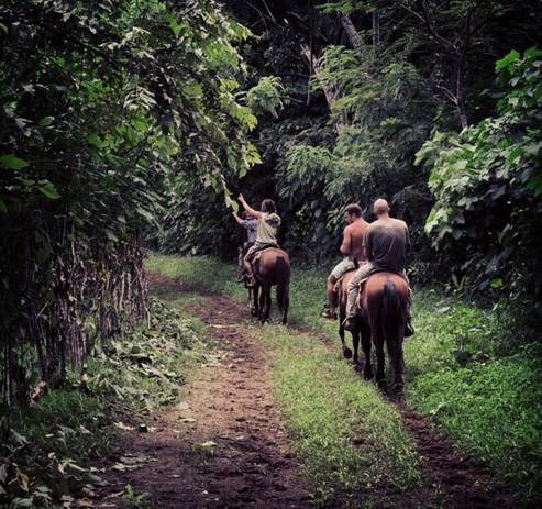 Horseback riding in Oria