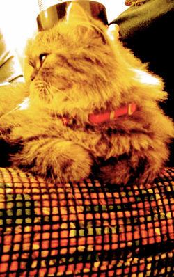 mimi the neighborhood kitty 2