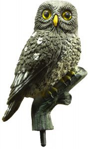 Little owl decoy