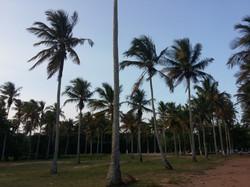 Praia de Coqueiral de Aracruz