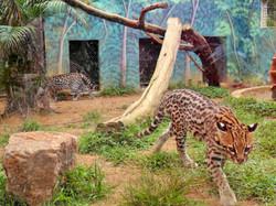 Zoo Park da Montanha