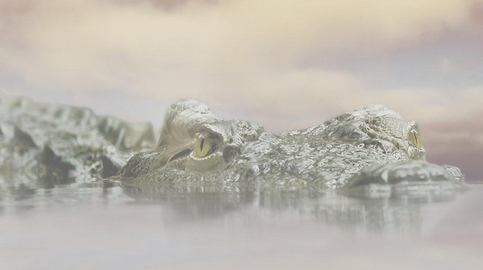 crocodile-594305_1920_edited.jpg