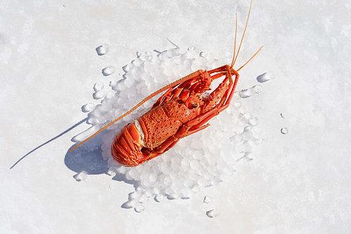 Crayfish Western Australian