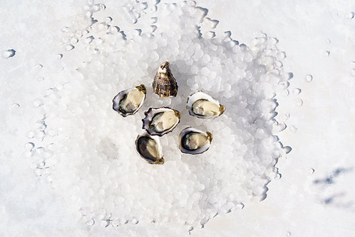 Pacific Oysters