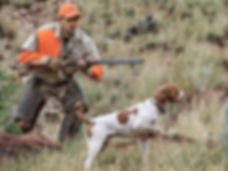 hunting-dog-on-the-scent-with-ready-hunt