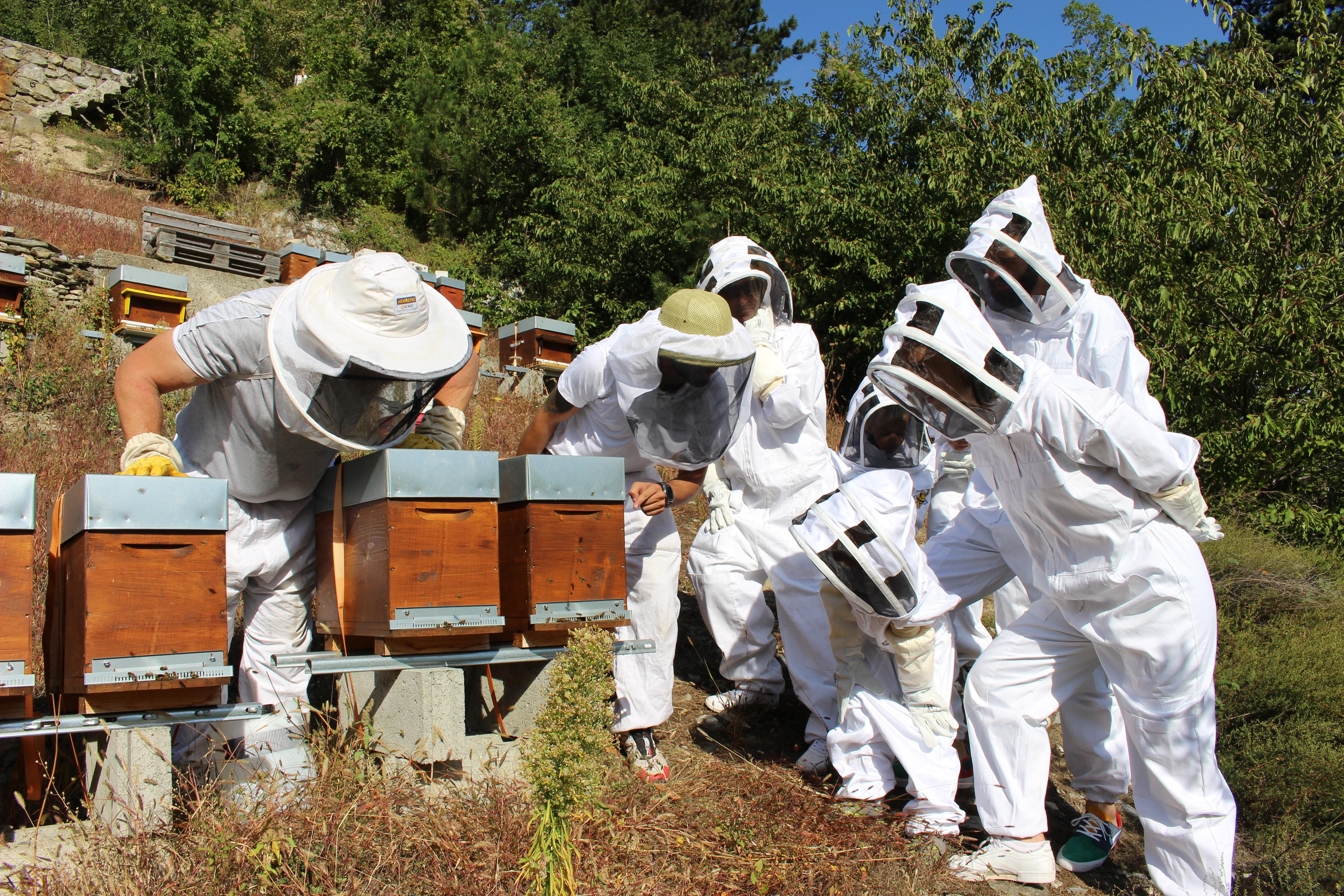 Initiez vous! Ayez votre propre ruche !
