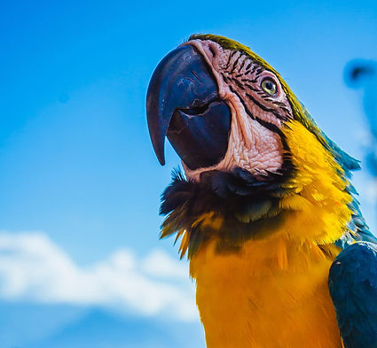 yellow%20and%20blue%20parrot%20perched%2