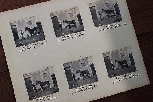 Dépôt d'étalons d'Angers (1905). 78 photographies originales. Album. Rare