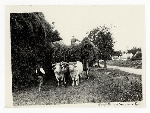 Photographie ancienne vers 1910 confection meule boeufs agriculture bourgogne