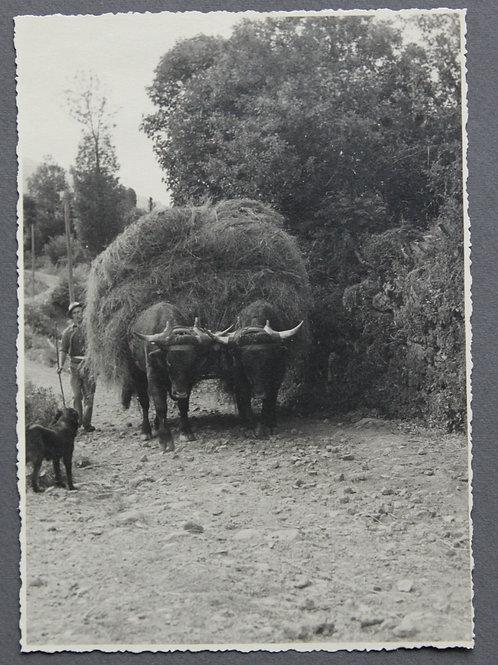Le Falgoux en Auvergne. Photographie originale années 1950 ramassage foins