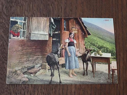 CPA couleurs Bergères Chèvres Chalet Suisse Alpes Montagne