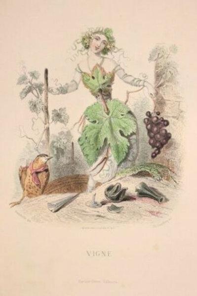 Grandville Fleurs animées 1867 Estampe aquarellée Femme Fleur Vigne Fée nature