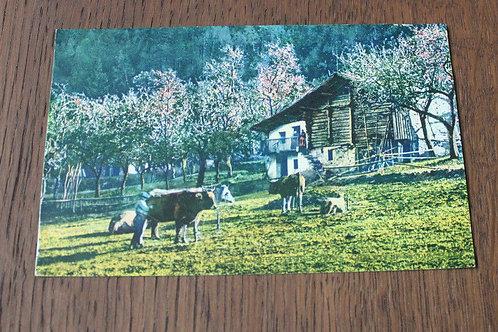 CPA couleur Paysage de Montagne Montagnards Paysans Vaches Chalet