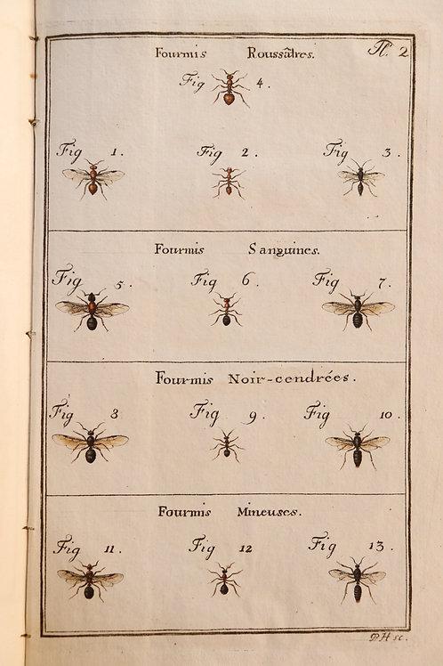 Pierre Huber. Recherches sur les mœurs des fourmis indigènes (1810). Papier fort