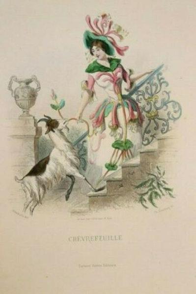 Grandville Fleurs animées 1867 Estampe aquarellée Femme Fleur Chèvrefeuille fée