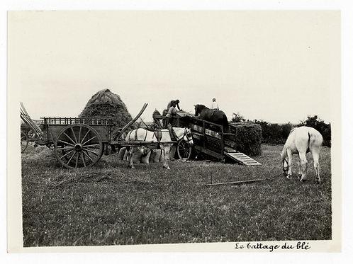 Photographie ancienne vers 1910 Le battage du blé chevaux agriculture bourgogne
