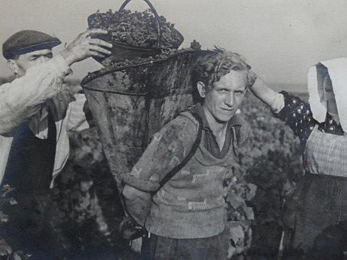 Henri Gros (Photographe). Un porteur de hotte. Vendanges en Bourgogne