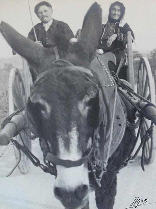 Henri Gros (Photographe). Un âne de Beaune. Vendanges en Bourgogne