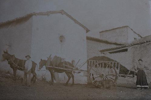 Photographie ancienne 1905 village de Provence Provinciaux Charrette âne