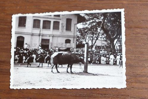 7 Photographies anciennes 1937 Viêt Nam Vinh long Moïs Sacrifice Buffle