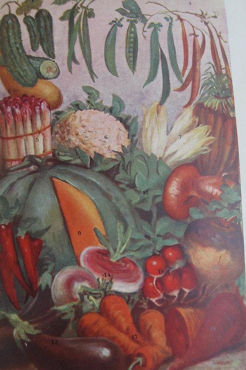 La cuisine moderne illustrée. Gastronomie Française (1946)